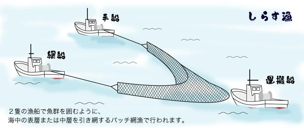 しらす漁イラスト