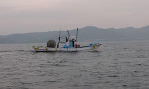 しらす漁イメージ01
