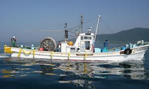 しらす漁イメージ05